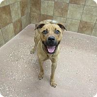 Adopt A Pet :: Jaxon #2 *Petsmart GB* - Appleton, WI