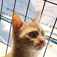 Adopt A Pet :: Rusty - Los Angeles, CA