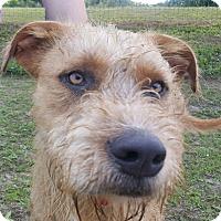 Adopt A Pet :: BUDDY-ADOPTED - Cranston, RI