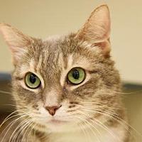 Adopt A Pet :: Pretty - New York, NY