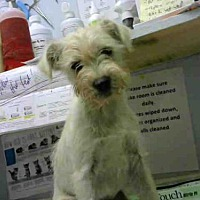 Adopt A Pet :: HANSEL - Atlanta, GA