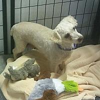 Adopt A Pet :: Madonna - Mukwonago, WI