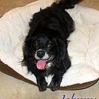 Adopt A Pet :: Johnny - York, SC