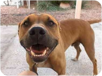 Charlie | Adopted Dog | Bellflower, CA | American Pit Bull ...
