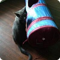 Adopt A Pet :: Little Clyde - Mobile, AL
