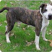 Adopt A Pet :: T-Bone - Chicago, IL
