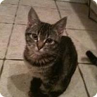 Adopt A Pet :: Ashton - justin, TX