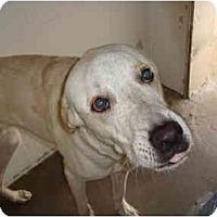 Adopt A Pet :: Mikey - Winter Haven, FL