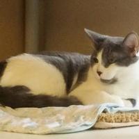 Adopt A Pet :: Buckley - Redmond, OR