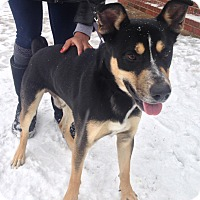 Adopt A Pet :: Charles Barkley