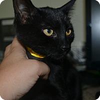 Adopt A Pet :: Blanche - East Smithfield, PA