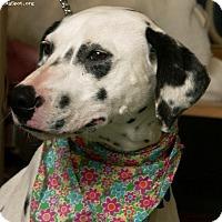 Adopt A Pet :: Meadow (Mylee) - Newcastle, OK