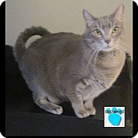 Adopt A Pet :: Tiger - Gilbert, AZ