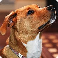 Adopt A Pet :: Dawn - Pitt Meadows, BC
