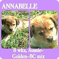 Adopt A Pet :: Annabelle - Dallas, TX