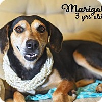 Adopt A Pet :: Marigold - Lonely Heart - Gulfport, MS