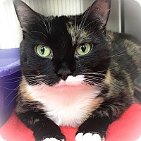 Adopt A Pet :: Emily - Webster, MA