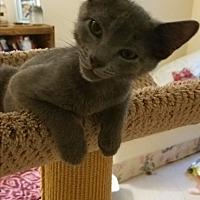 Adopt A Pet :: Herman - Fairfax, VA