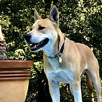 Adopt A Pet :: SUKI - Knoxville, TN