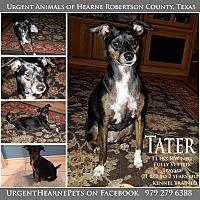 Adopt A Pet :: Tater - Hearne, TX