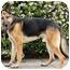 Photo 4 - German Shepherd Dog Dog for adoption in Los Angeles, California - Fritz von Fuerst