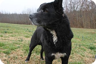 Chow Chow Mix Dog for adoption in Mineral, Virginia - Albert