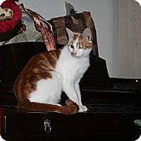 Adopt A Pet :: Sebastion - Santa Rosa, CA