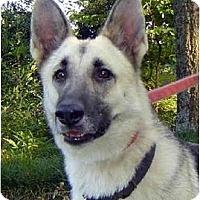 Adopt A Pet :: Gingi - Pike Road, AL
