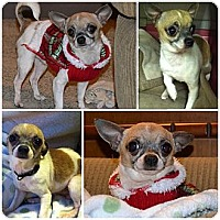 Adopt A Pet :: Petey ~Adopted! - Troy, OH