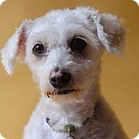 Adopt A Pet :: July - Milan, NY