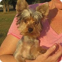 Adopt A Pet :: Ernest - Salem, NH