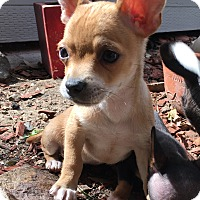 Adopt A Pet :: Lemon - San Diego, CA