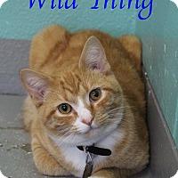 Adopt A Pet :: Wild Thing - Bradenton, FL
