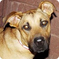Adopt A Pet :: Neiko - Oxford, MS