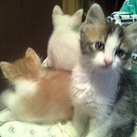 Adopt A Pet :: Cherub - Whitney, TX