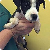Adopt A Pet :: 17-07-2066 Rosie - Dallas, GA