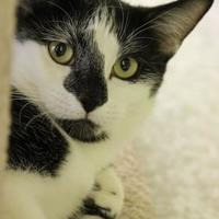 Adopt A Pet :: Marilyn - Fairfax, VA