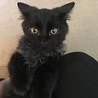 Adopt A Pet :: Elliot - Toronto, ON