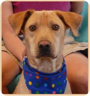 Labrador Retriever Mix Dog for adoption in Las Vegas, Nevada - Hutch