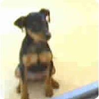 Adopt A Pet :: Karlie - Evansville, IN