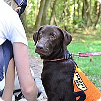 Adopt A Pet :: Denise - Cumming, GA