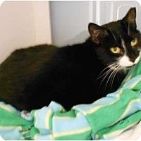 Adopt A Pet :: Willamina - Maywood, NJ