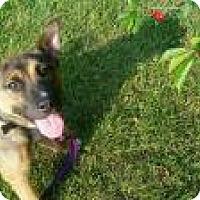 Adopt A Pet :: Sweet Caroline - Marlton, NJ