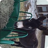 Adopt A Pet :: Waco - Malvern, IA