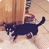 Adopt A Pet :: Patrick - FORT WORTH, TX