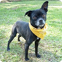 Adopt A Pet :: Mona - Mocksville, NC