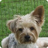 Adopt A Pet :: Ralph - Rochester, NY