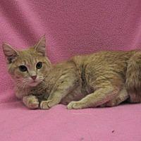 Adopt A Pet :: Kenna - Redwood Falls, MN