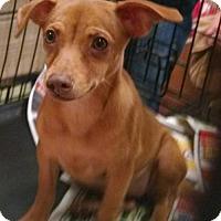 Adopt A Pet :: Tip - Pembroke, GA