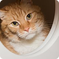 Adopt A Pet :: Trouble - Lowell, MA